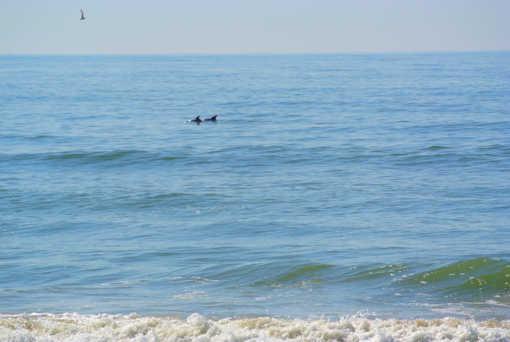 Delfine Topsail