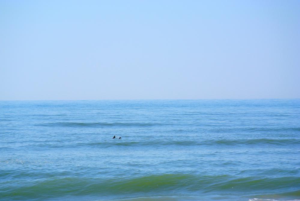 delfine2