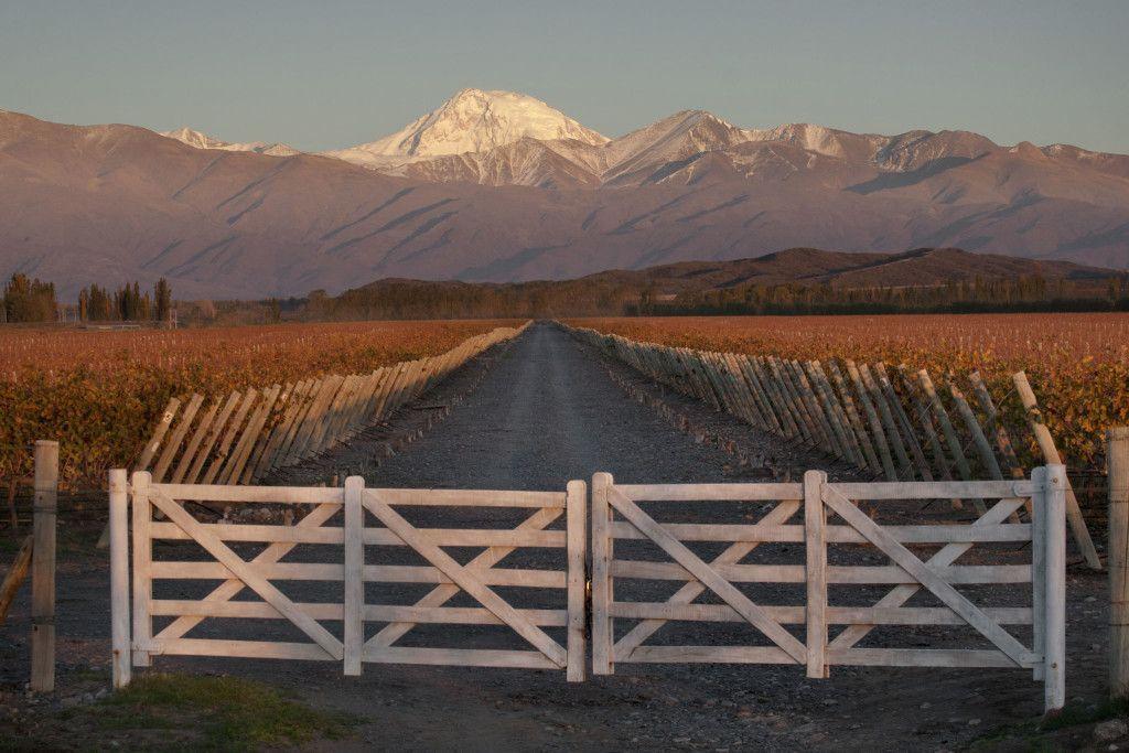 errazas de los Andes Caicayen
