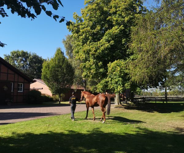 stud farm Fährhof – in the footsteps of Walter Jacobs